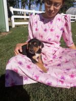 Mixed Puppies for sale in Fairfield, MT 59436, USA. price: NA