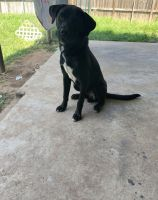 Mixed Puppies for sale in Houston, TX 77034, USA. price: NA