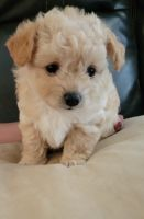 Mixed Puppies for sale in Hollister, CA 95023, USA. price: NA
