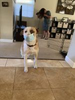 Mixed Puppies for sale in Riverview, FL, USA. price: NA