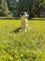 Mixed Puppies for sale in Newnan, GA, USA. price: NA