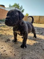 Mixed Puppies for sale in Albuquerque, NM 87105, USA. price: NA