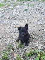 Mixed Puppies for sale in Sugar Grove, PA 16350, USA. price: NA
