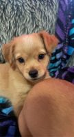 Mixed Puppies for sale in Shrewsbury, MA 01545, USA. price: NA