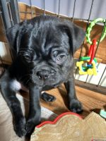 Mixed Puppies for sale in Oxford, WI 53952, USA. price: NA