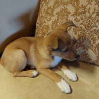 Mixed Puppies for sale in Ann Arbor, MI, USA. price: NA