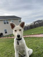 Mixed Puppies for sale in Ludowici, GA 31316, USA. price: NA