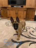 Mixed Puppies for sale in Gatesville, TX 76528, USA. price: NA