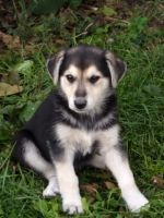 Mixed Puppies for sale in West Alexandria, OH 45381, USA. price: NA