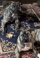 Mixed Puppies for sale in Birmingham, AL, USA. price: NA