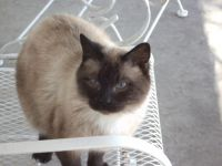 Mixed Cats for sale in Hampton, IA 50441, USA. price: NA