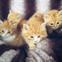Mixed Cats for sale in Mill Hall, PA 17751, USA. price: NA