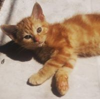 Mixed Cats for sale in Greensboro, NC, USA. price: NA