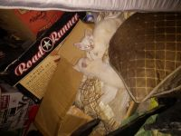Mixed Cats for sale in Houston, TX, USA. price: NA