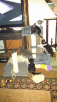 Mixed Cats for sale in Orwigsburg, PA 17961, USA. price: NA