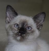 Mixed Cats for sale in Loogootee, IN 47553, USA. price: NA