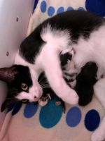 Mixed Cats for sale in NJ-17, Paramus, NJ 07652, USA. price: NA