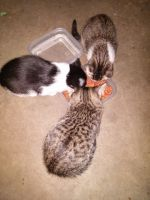 Mixed Cats for sale in Hager City, WI 54014, USA. price: NA