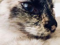 Mixed Cats for sale in 4214 Rawlins St, Dallas, TX 75219, USA. price: NA