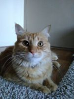 Mixed Cats for sale in West Chester Township, OH 45241, USA. price: NA