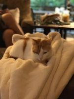 Mixed Cats for sale in Tomball, TX, USA. price: NA