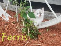 Mixed Cats for sale in Deer Park, WI 54007, USA. price: NA