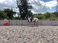 Mixed Horses Photos
