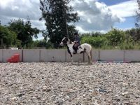 Mixed Horses for sale in Portland, OR, USA. price: NA
