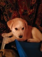 Mixed Puppies for sale in Trenton, TN 38382, USA. price: NA