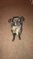 Mixed Puppies for sale in Davenport, IA, USA. price: NA