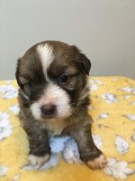 Mixed Puppies for sale in Oxford, AL, USA. price: NA
