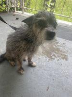Mixed Puppies for sale in 3187 Kingston Rd NW, Atlanta, GA 30318, USA. price: NA