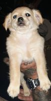 Mixed Puppies for sale in Valdese, NC, USA. price: NA