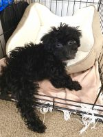 Mixed Puppies for sale in Nassau County, NY, USA. price: NA