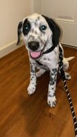 Mixed Puppies for sale in Austin, TX 78723, USA. price: NA