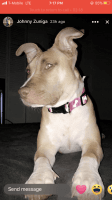 Mixed Puppies for sale in Tacoma, WA 98499, USA. price: NA