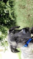 Mixed Puppies for sale in 220 Indian Lake Trail, Villa Rica, GA 30180, USA. price: NA
