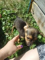 Mixed Puppies for sale in Newcomerstown, OH 43832, USA. price: NA