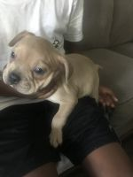 Mixed Puppies for sale in Columbus, OH 43203, USA. price: NA
