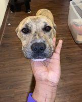 Mixed Puppies for sale in Downtown Atlanta, Atlanta, GA, USA. price: NA