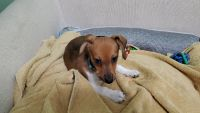 Mixed Puppies for sale in Olney, MD, USA. price: NA