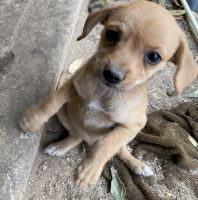 Mixed Puppies for sale in DEVORE HGHTS, CA 92407, USA. price: NA
