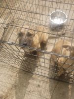 Mixed Puppies for sale in Warren, OH, USA. price: NA