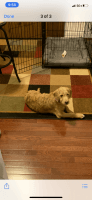 Mixed Puppies for sale in Stafford, VA 22554, USA. price: NA