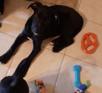 Mixed Puppies for sale in Venice, FL, USA. price: NA