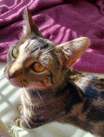 Mixed Cats for sale in Glassboro, NJ, USA. price: NA