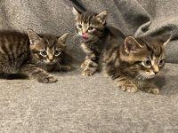 Mixed Cats Photos