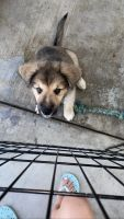 Mixed Puppies for sale in Los Angeles, CA 90011, USA. price: NA