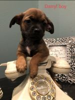 Mixed Puppies for sale in Portland, OR, USA. price: NA
