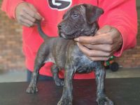 Mixed Puppies for sale in Morrow, GA 30260, USA. price: NA